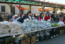 Volunteer for food distribution los alamitos